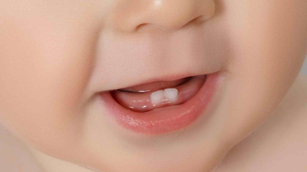 baby bottom teeth
